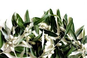 olive-leaf-2657695_1280
